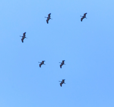 A flock of migratory birds against a blue sky .