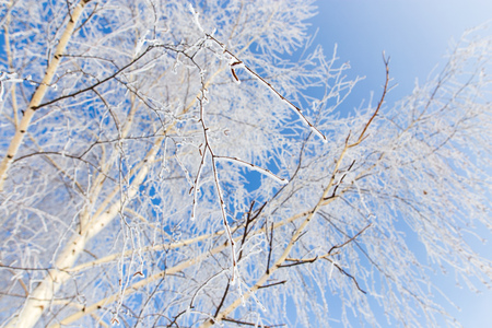 Frozen branches on a tree in the forest in winter .