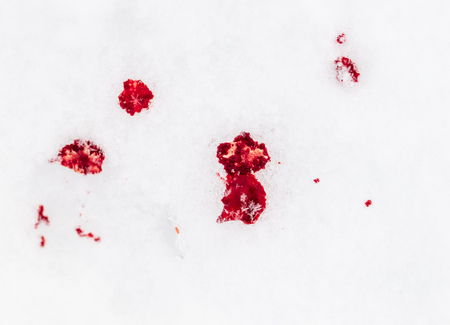 Red blood on white snow as a background.