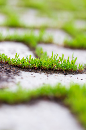 Green grass growing on the pavement tiles in the park Imagens - 115807202