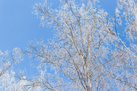 Frozen branches on a tree against a blue sky .