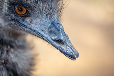 Portrait of an ostrich in the park .