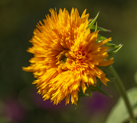 Orange flower on nature as a background. Imagens