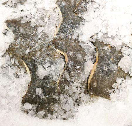 Fish in the ice on the counter in the store. Banco de Imagens - 120397992