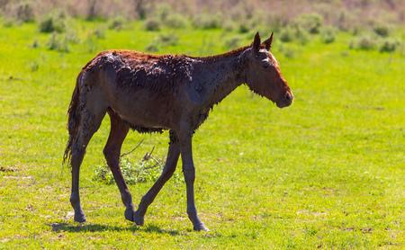 Horse grazes on green grass in spring. 写真素材