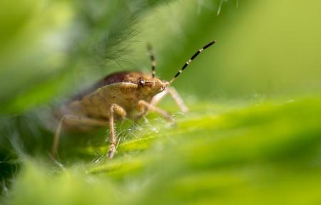 bedbug in nature in spring.