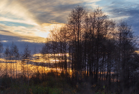 Tree branches at sunset in autumn.