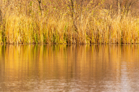 Grass and reed with reflection in the pond. Stok Fotoğraf - 123120726