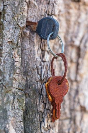 Rusty keys in the bark of a tree .