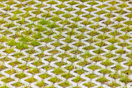 Grass on the sidewalk as background .