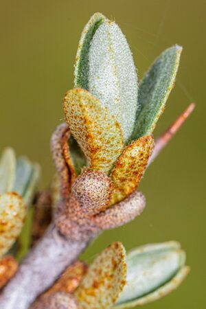 Small leaves on a tree branch in spring. Macro Banco de Imagens