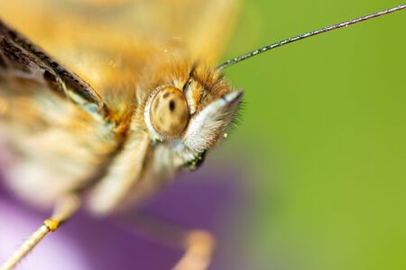 A portrait of a butterfly on a lilac flower in the park . Archivio Fotografico - 125801196