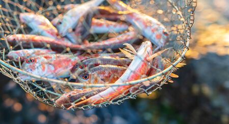 Red mullet caught in the sea. Fish fisherman Imagens