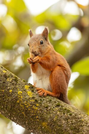 Portrait of a squirrel on a tree.