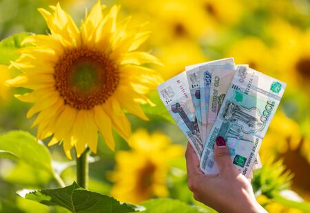 Money rubles in the hands of a girl in a field with sunflowers .