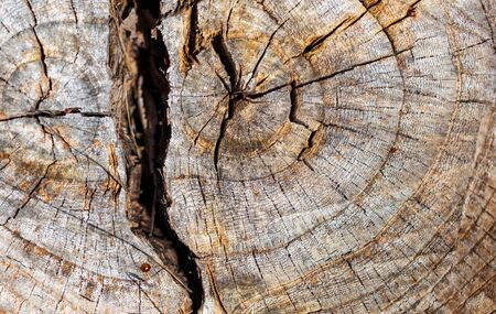 Stump from a sawn tree in nature. 写真素材