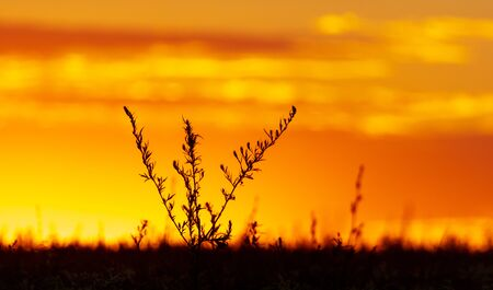 Plants in the field at sunset. Archivio Fotografico - 129442973