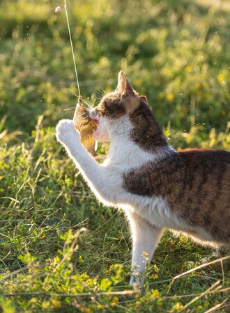 The cat wants to eat fish in nature. Archivio Fotografico - 129444413