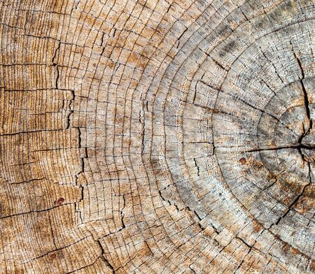 Stump from a sawn tree in nature. Фото со стока