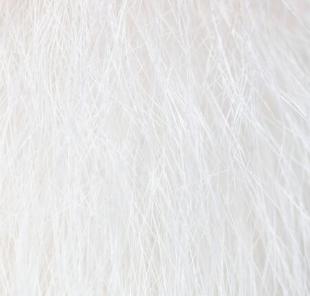 White wool of a cat as a background. Macro