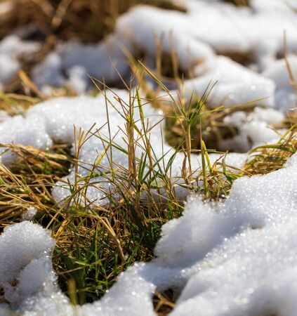 The first snow on dry grass in nature. Foto de archivo - 129859011