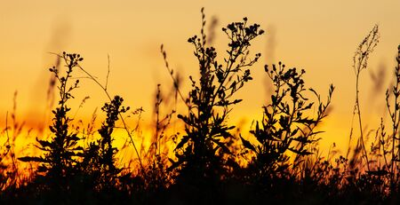 Plants in the field at sunset. Stock fotó