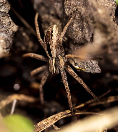 Portrait of a spider in the ground. Macro
