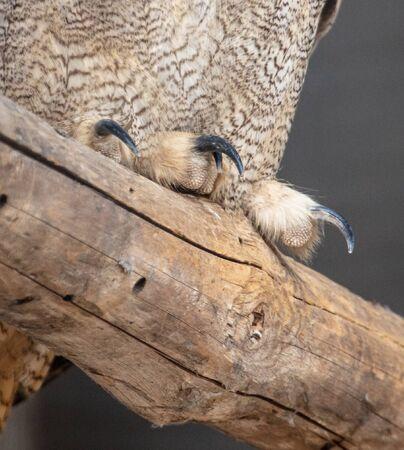 Eagle owl paw on a log in a zoo. Stok Fotoğraf