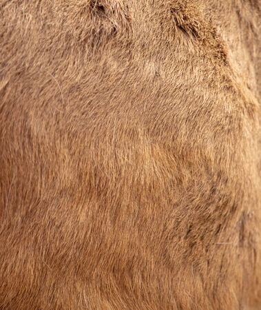 Skin of a deer as an abstract background. Фото со стока