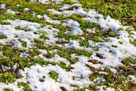 Snow on the green grass in spring. Stock fotó