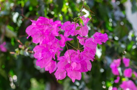 Beautiful pink flowers in nature.