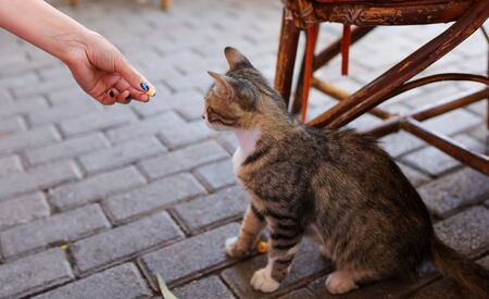 Girl feeds a cat in the city. 写真素材