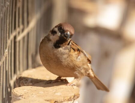 Portrait of a sparrow in a cage. Imagens