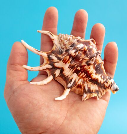 Sea shell in hand isolated on a blue background.