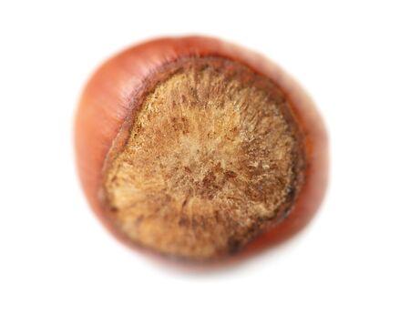 Hazelnut nut isolated on a white background. Standard-Bild - 133250174