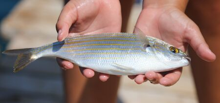 Sea fish in the hands of a boy. Stock Photo