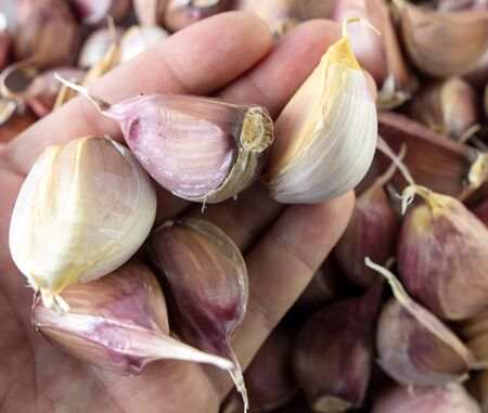 Cloves of garlic in the hand.