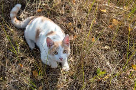 Portrait of a cat in the grass in the fall.