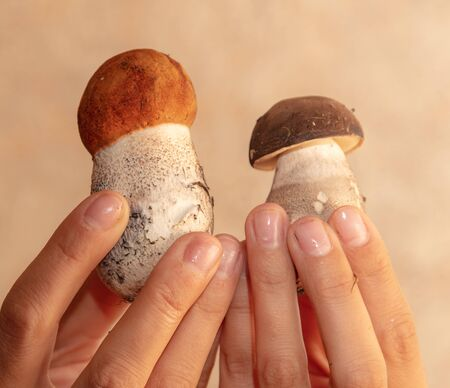 Edible mushroom from the forest in the hand of a man. 版權商用圖片