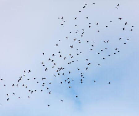 Une volée d'oiseaux contre le ciel avec des nuages. Banque d'images