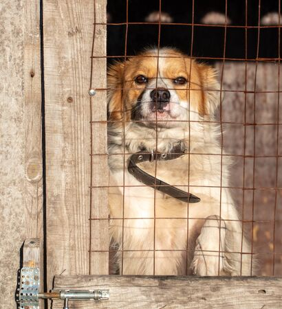 Portrait of a dog behind a fence in a booth.