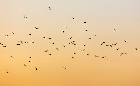 A flock of birds at dawn.