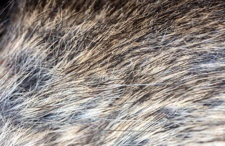 Mouse wool as an abstract background. Macro