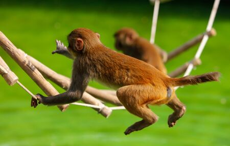 Monkeys are playing on the stairs in the park. Animal mammal Stockfoto