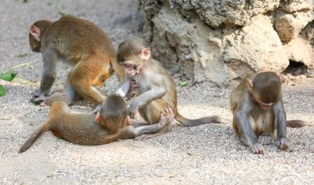 Monkeys are playing in the park. Animal mammal Stockfoto