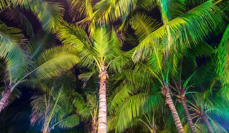 Large coconut palm leaves on the nature at night.