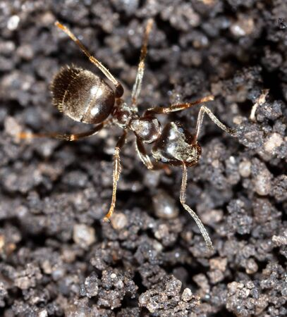 Ant crawling on the ground. Macro