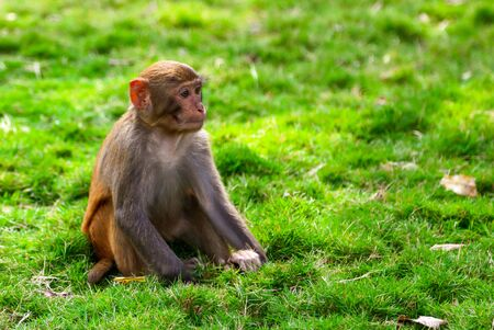 Portrait of a monkey in the park. Animal mammal