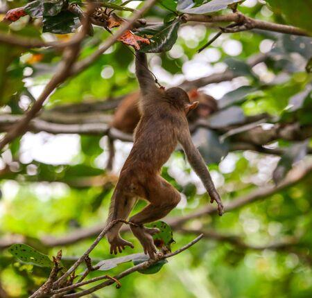 Little monkey on a tree in the park. Animal mammal