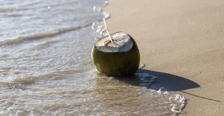 Coconut swims in the water on the seashore. Fruit in the tropics.